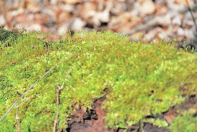 Spring unfolds in city woodlands