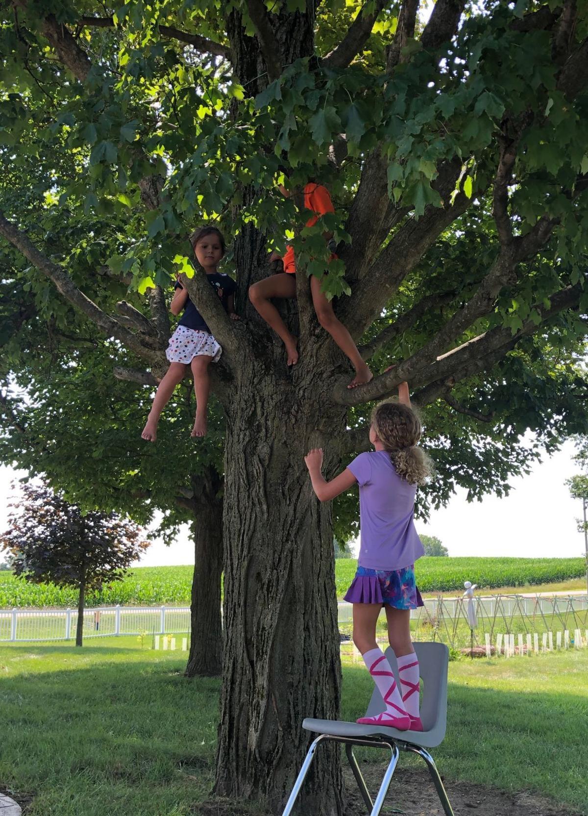 Oak Farm tree climb
