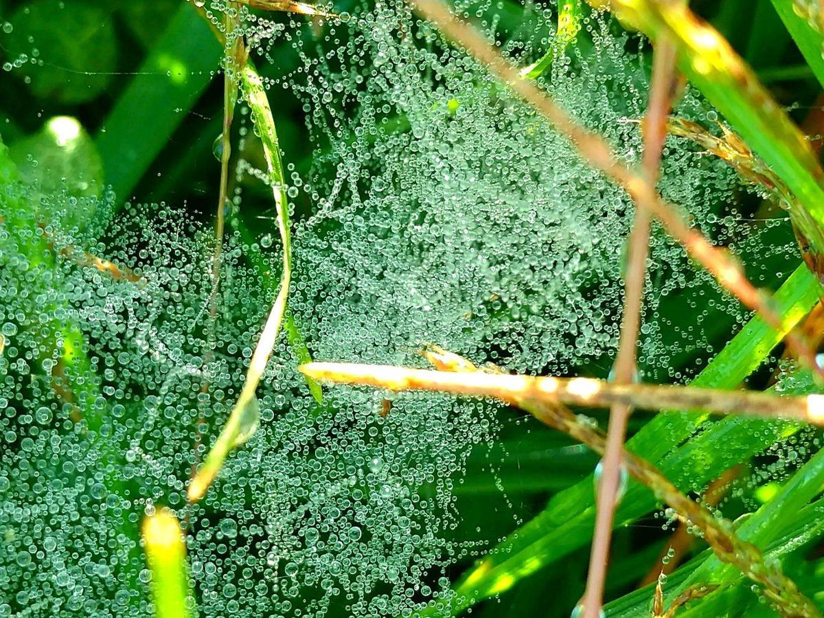 Dew-bubbles
