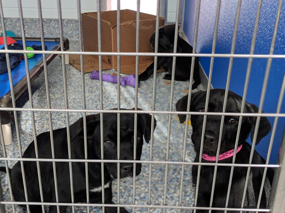 Community Humane shelter accepts ASPCA transports
