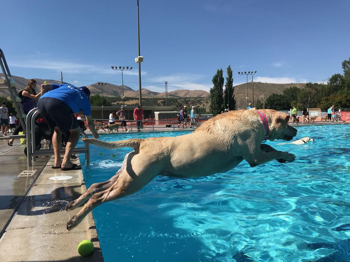 A Pool Party for Your Pup