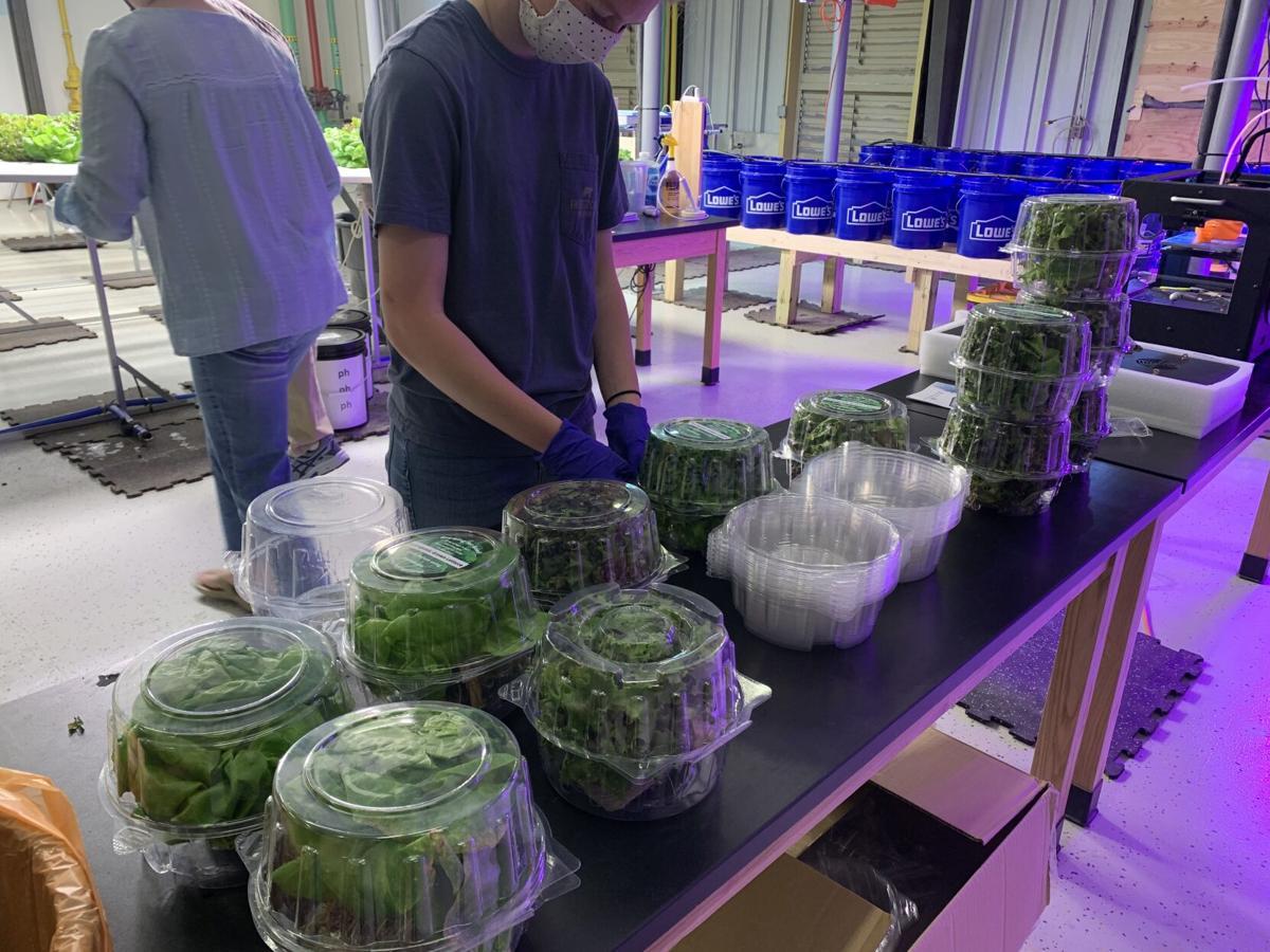 Byrd hydro farm packaged lettuce