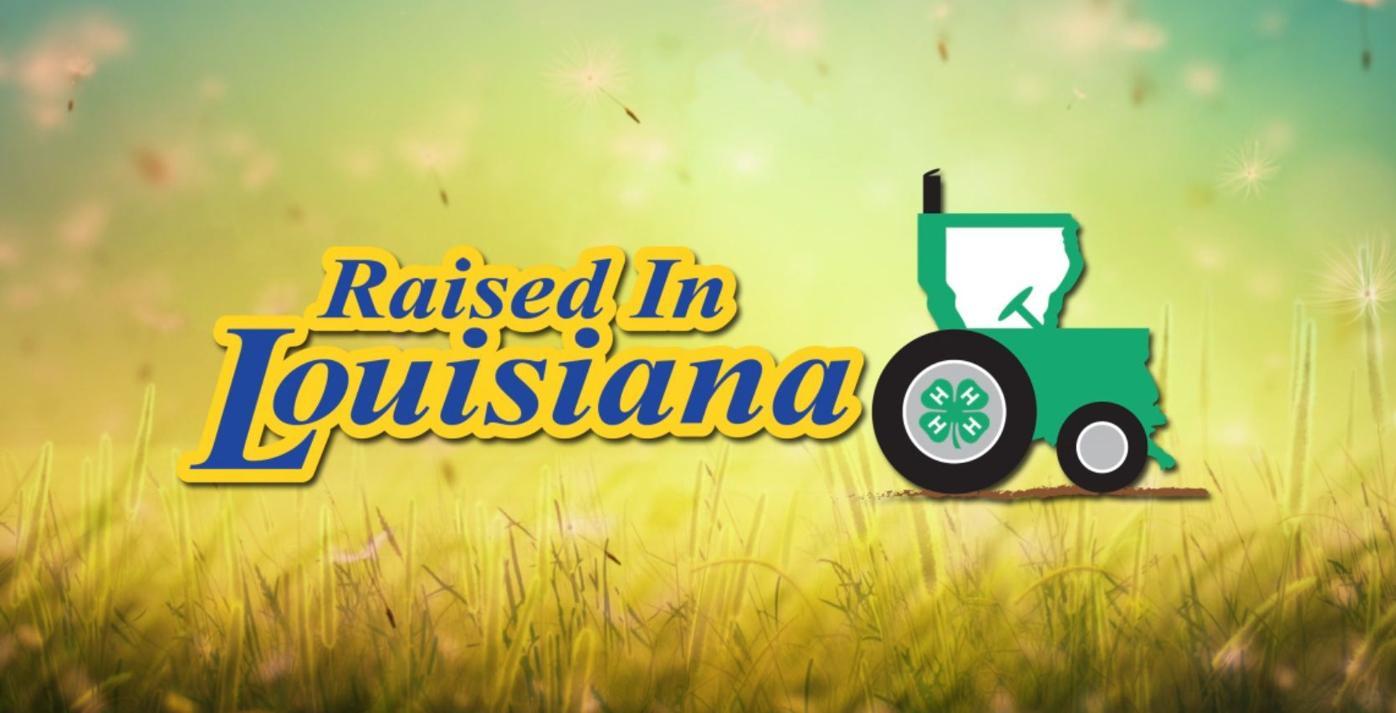 Raised in Louisiana