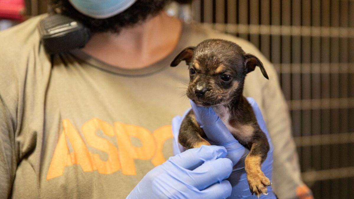 Dog Rescue Lake Charlesx