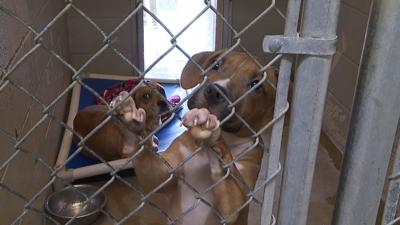 Interim Director shares plans for animal shelter