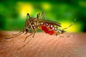 Texas officials spraying for mosquitoes