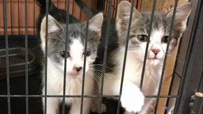 Cats, Bossier City Animal Control
