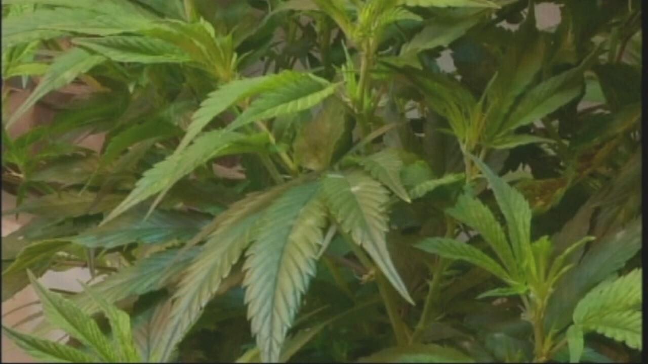 Advocates push to get recreational marijuana initative on the ballot in Arkansas