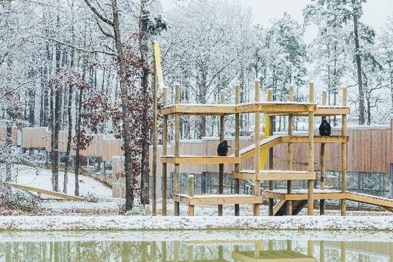 Chimp Haven Snow Day