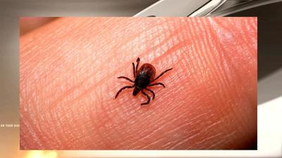 Tick season in full swing