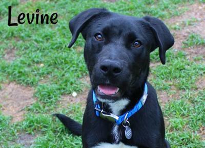 Levine - Humane Society of Northwest Louisiana