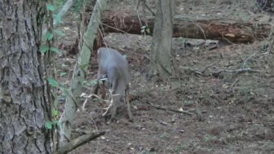 CWD 2019 deer
