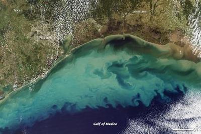 Gulf of Mexico's Dead Zone