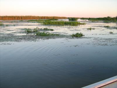 Louisiana Marshland
