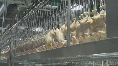 Restaurants face nationwide chicken shortage