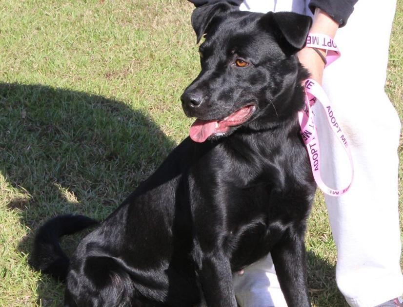 Animal Shelter In Desoto Parish Searches For A Rescuer Community Ktbs Com