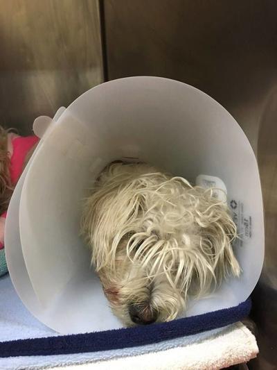 alvin missoula animal control rescued dog