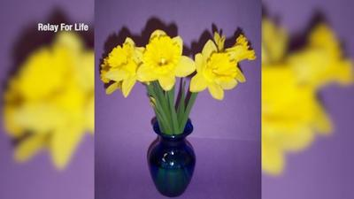 """Daffodil Days"" returns for Relay for Life in Yellowstone County"