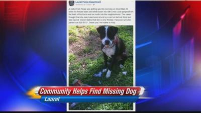 Laurel community helps traveler find his dog