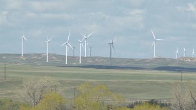 Wind turbines kill birds and bats