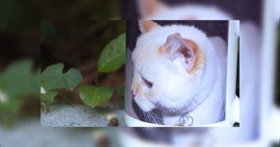 Deceased cat receives voter registration form in mail, owners don't know why
