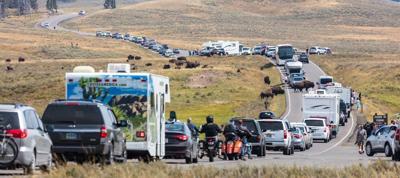Yellowstone National Park traffic