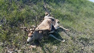 FWP offers reward for information on mule deer buck