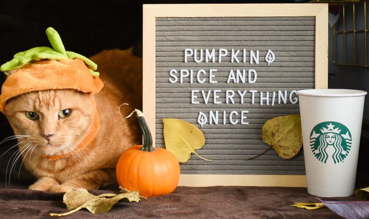 Montana Animal Shelter Celebrates Fall With Pumpkin Spice Cats Montana News Kulr8 Com