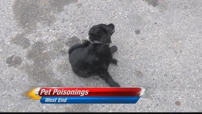 Suspicious pet poisonings reported on Billings West End