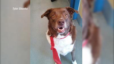 Euthanasia controversy at Yellowstone Valley Animal Shelter