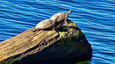 Nazi turtles