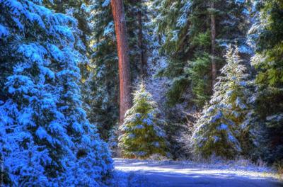 Christmas tree cutting permits available starting today