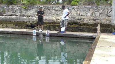 UM professor tests dolphins for language