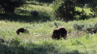 Wyoming releases proposals for grizzly hunts