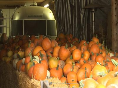 Laurel Farmer's Market protecting pumpkins from the cold