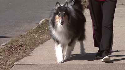 Your Health: Dog owners recover better after heart attack