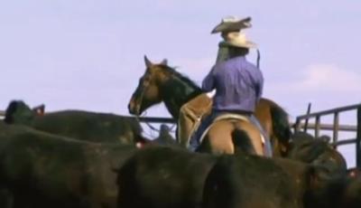 Cowboy Generic