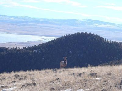 Images: Elk on the horizon
