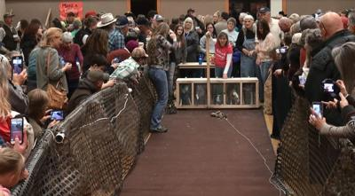 Cody dog races raise money for a good cause