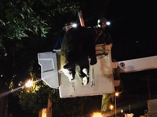 Firefighters help rescue bear stuck in tree in Anaconda