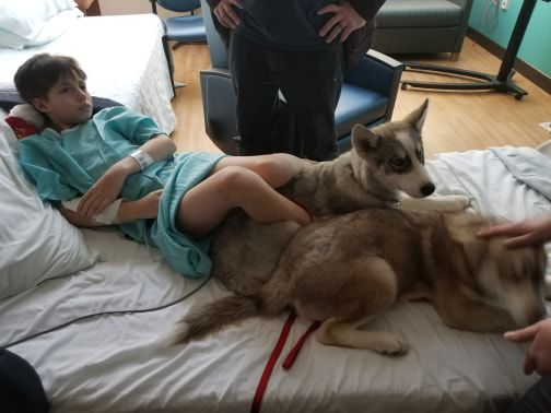Husky puppies reunited with family, girl in hospital
