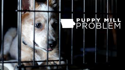 Iowa's Puppy Mill Problem TSR_GRX