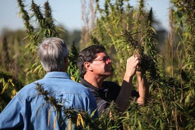 UK's research farm harvests state's 1st hemp crop in decades