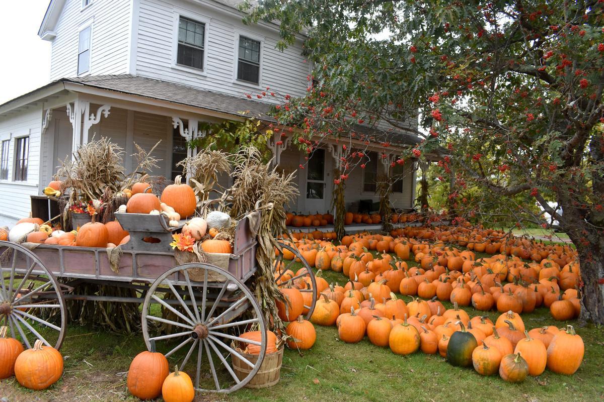 10-12 Pumpkin display 2