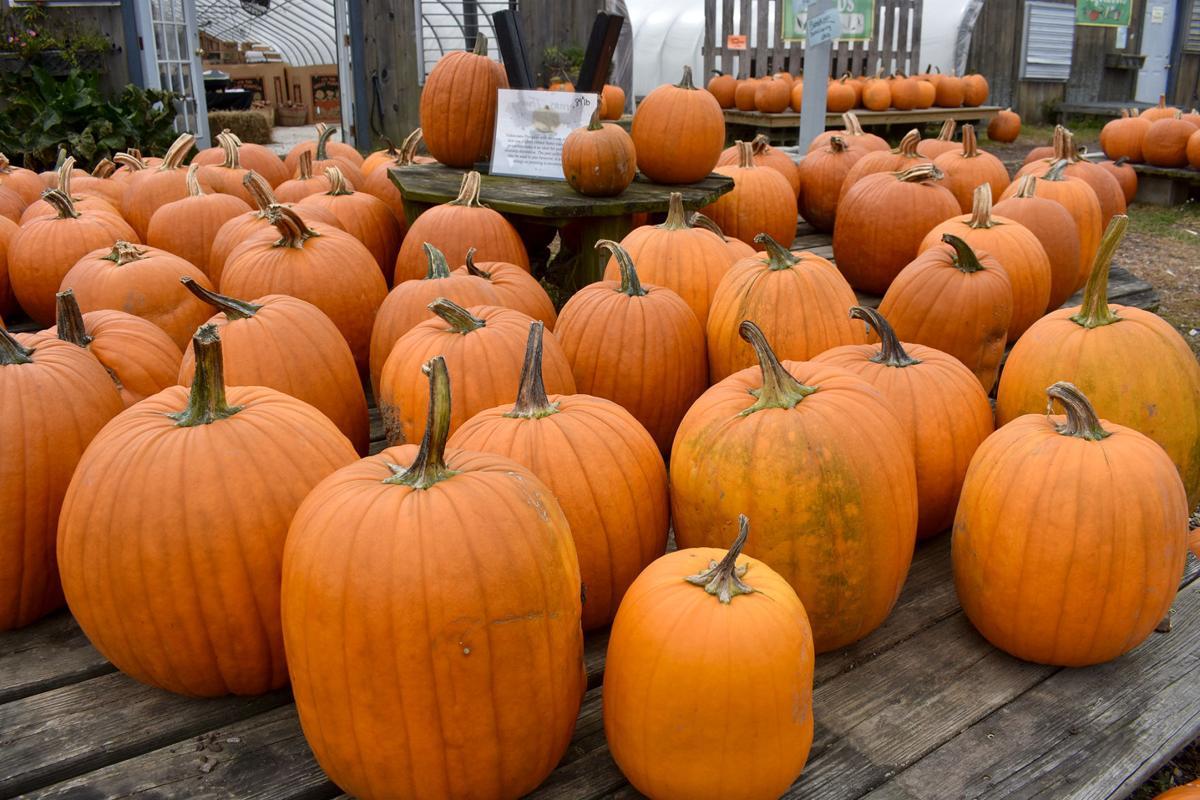 10-12 Pumpkin display 1
