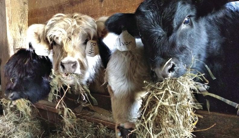 12-7 outdoors farm babies.jpg