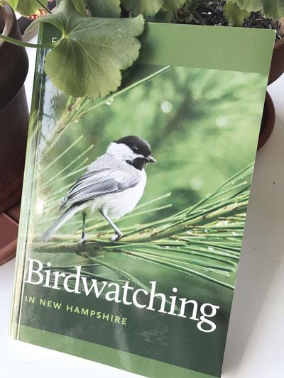 04-18 LS birdwatching.jpg