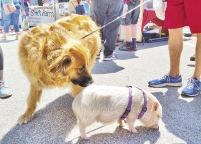 06-28 OUTDOOR Pig+Dog-enhanced.jpg