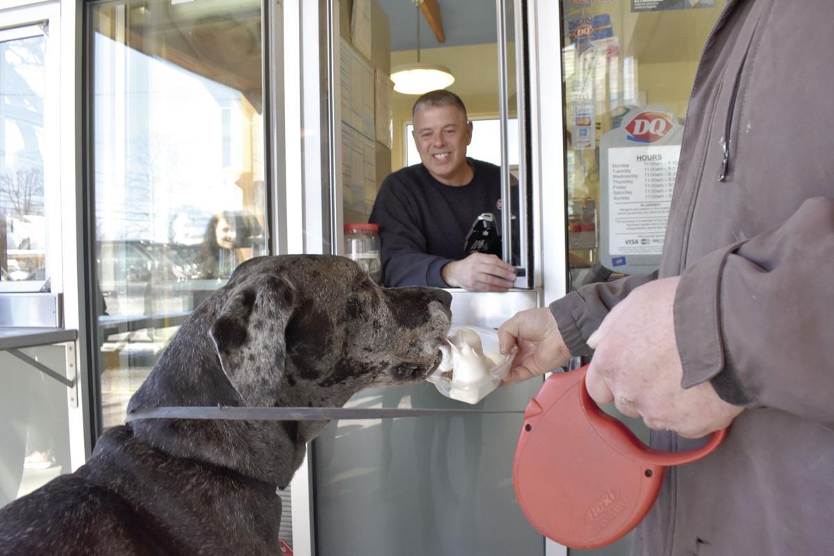Coming soon: The dog days of spring | Local News | laconiadailysun com