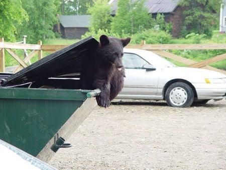 Bristol officer felt threatened, kills bear